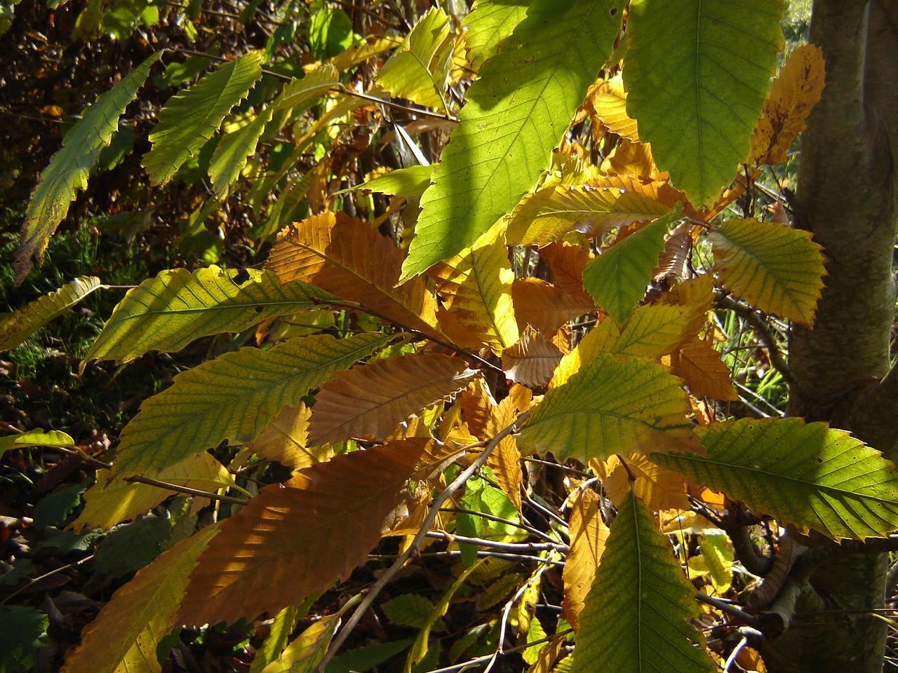 Balade contée d'automne